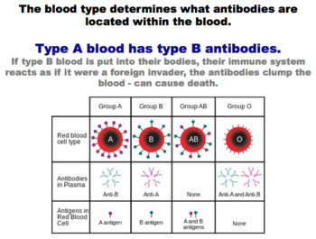 Codominance and Incomplete Dominance - Blood Types (Editable)