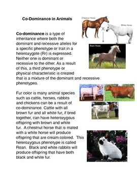 Codominance in Animals