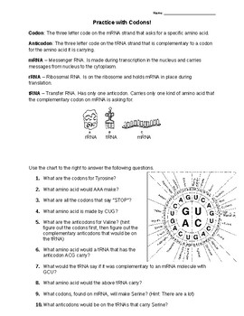 Codon Worksheet | Teachers Pay Teachers
