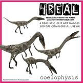 Coelophysis - 4 Realistic Dinosaur Clip Art Images