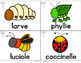 FRENCH Bugs & Insects Vocabulary Cards (Vocabulaire - Insectes & bestioles)