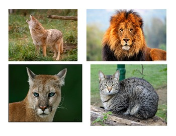 Collection of Animal Pictures for Research