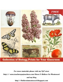 Collection of FREE Vintage Biology Prints for Your Classroom