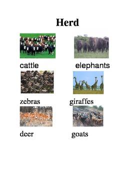ESL/ELD Collective Noun Animal Posters