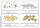 Collective Noun Cards