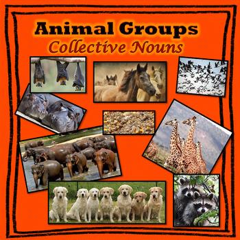 Collective Nouns - Animal Groups