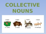 Collective Nouns/Group Terms ppt