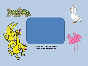 Collective Nouns - animals