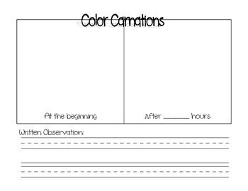 Carnation Teaching Resources   Teachers Pay Teachers