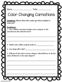 Color Changing Carnations by Andrea Brown- Cheers To School   TpT