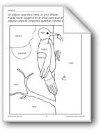 Color/Learn: Woodpecker