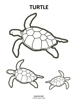 Color Me TURTLE