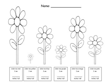 Color & Measure the Flowers