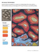 Color Scheme Worksheets - Microscopic Cells -Colored Pencil Activity Sheets