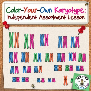 Color Your Own Karyotype: Independent Assortment Lesson fo