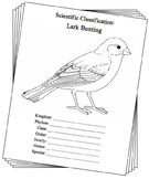 Colorado State Bird Notebooking Set (Lark Bunting)