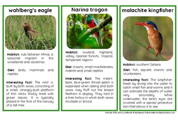 Colorful Birds Of Africa – Montessori Nomenclature And Information Cards