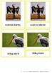 Colorful Birds Of Asia – Montessori Nomenclature And Infor