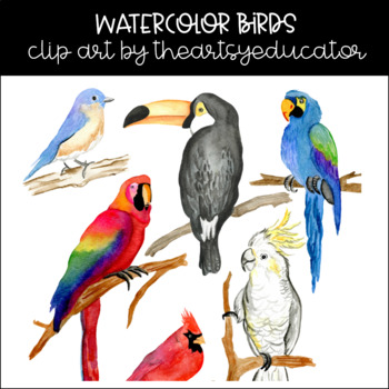 Colorful Birds Watercolor Clip Art