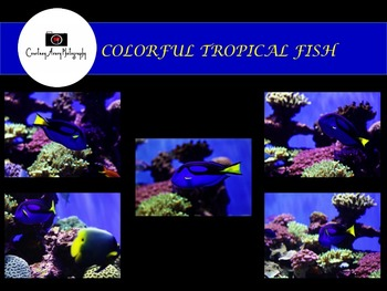 Colorful Tropical Fish Set 1 Stock Photos