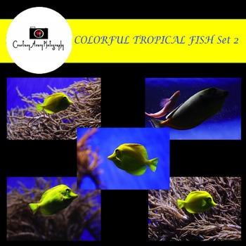 Colorful Tropical Fish Set 2 Stock Photos