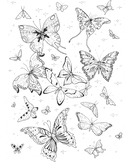 Coloring Page - Butterflies