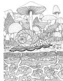 Coloring Page - Snail and Mushrooms