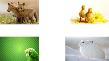 Colors in Spanish with Animals