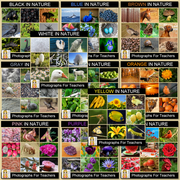 Colors in Nature Photograph Bundle