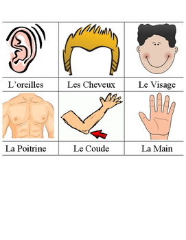 Colours/Face/Body - French Word Wall
