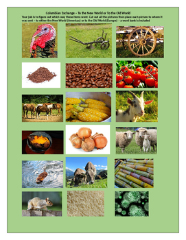 Columbian Exchange Worksheet - Place the Pictures to their