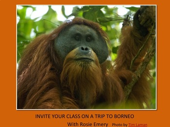 Come on a trip to Borneo!