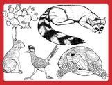 Comercial Clipart: Desert Animals and Plants in Black and White
