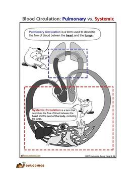 Comic: Blood Circulation, Pulmonary vs. Systemic
