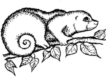 Commercial Clipart: Rainforest Wildlife in Black and White