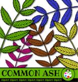 Common Ash Leaf Clip Art Set
