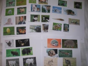 Common Core Animals-Seasons, Habitats & parents/babies