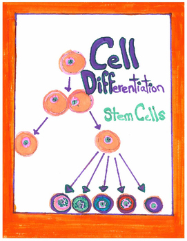 Cell Differentiation; Common Core Close Reading Article and Activity