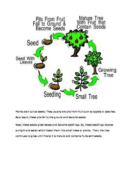 Common Core Differentiated Plant Unit