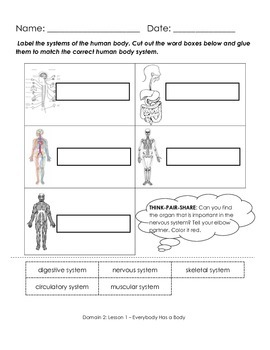 Common Core Listening and Learning 1st Grade Doman 2 The Human Body  Worksheets