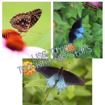 Stock Photos: Common Garden Butterfly Photos