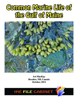 Common Marine Life of the Gulf of Maine