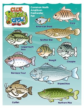 North American Freshwater Fish Poster