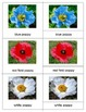Common Poppy Varieties