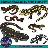 Common Salamanders Clip Art