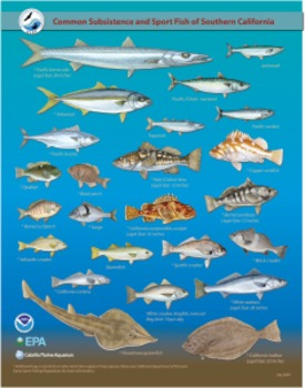 Common Subsistence and Sport Fish of Southern California Identification Card
