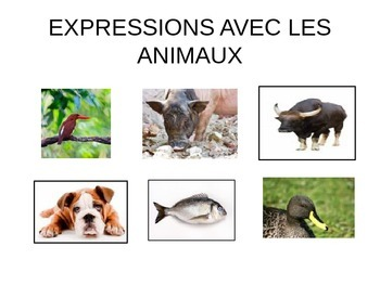 Common expressions and sounds with animals in French