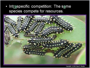 Community Ecology Lesson, Animal Competition