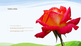 Como plantar Rosas