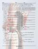 Comparative Adjectives Decoder Box Worksheet